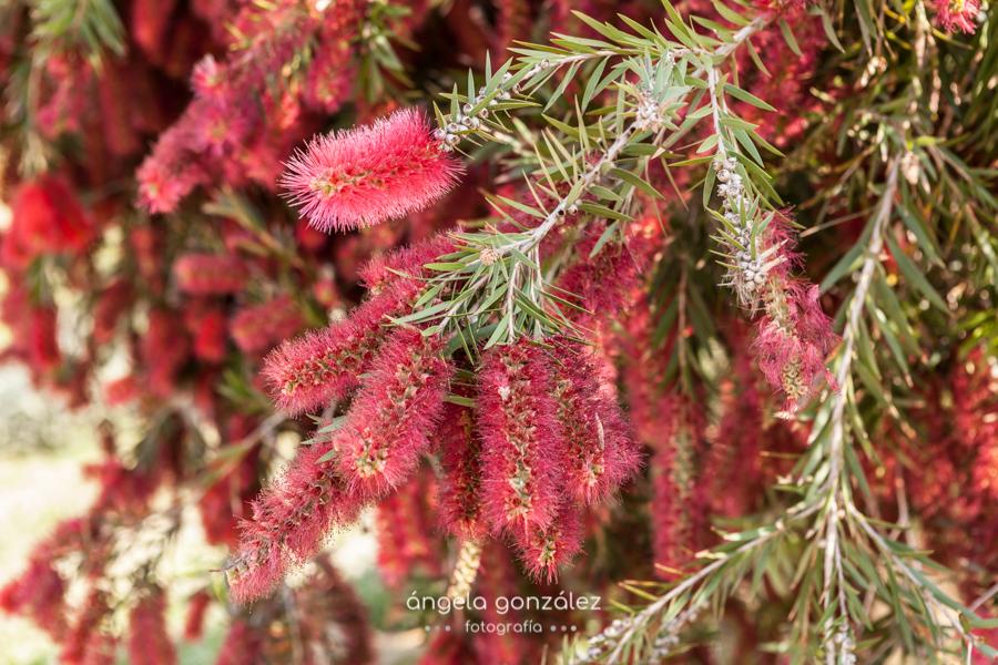 Flores, Estepona, sesión de fotos en plena naturaleza